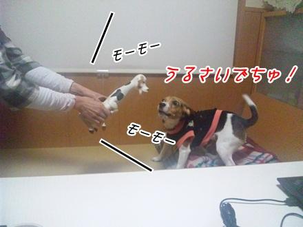 006_20120208230118.jpg