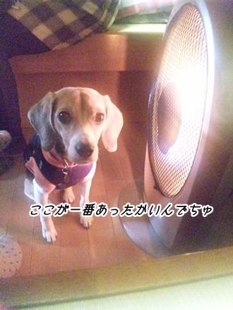 007_20120208225857.jpg