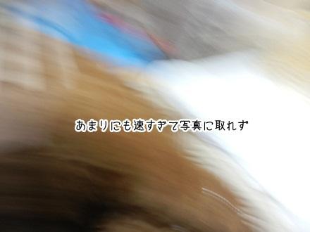 010_20111202230623.jpg