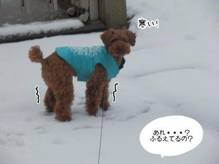 011_20111218223852.jpg
