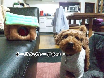 022_20120207232937.jpg