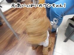 026_20120401233219.jpg