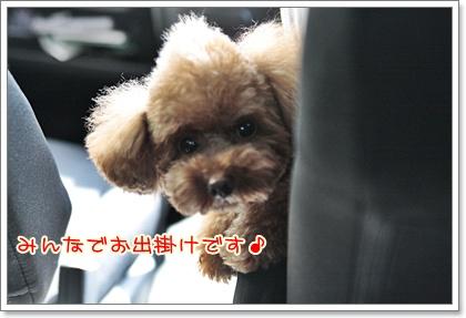 1_20110826204206.jpg