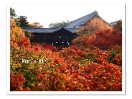 111124(クリスマス)京都紅葉