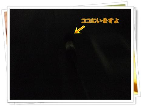 004_20110822211903.jpg