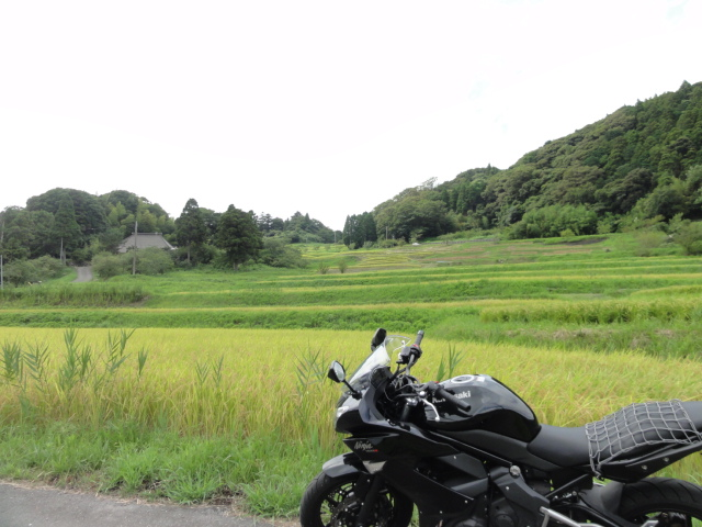 ninjaと棚田2