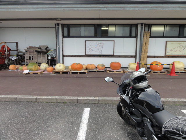 ninjaとかぼちゃ