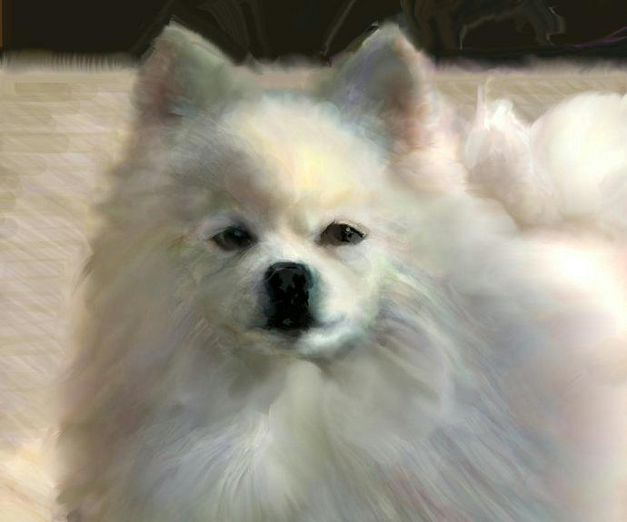 犬絵 白いポメラニアン690