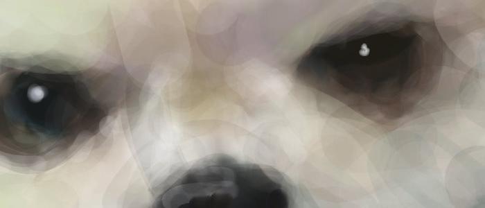 犬絵 ハロ 想い出  原寸 目