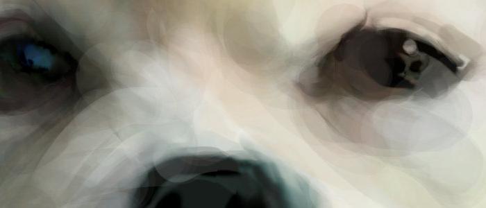 犬絵 白いポメラニアン  原寸 目