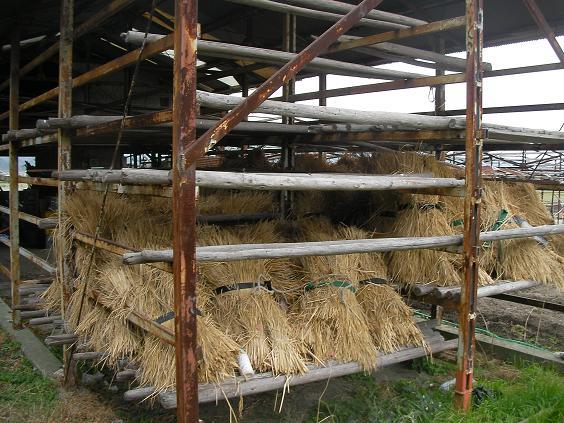 藁小屋ですね