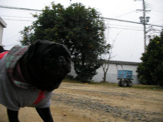 0213犬ウエア