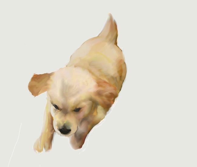 犬絵 天使 648