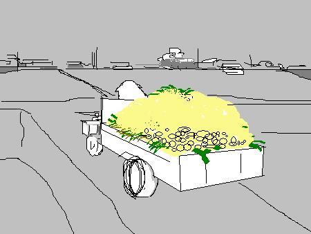 玉ねぎ農家