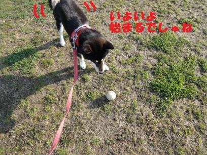 野球のボール③
