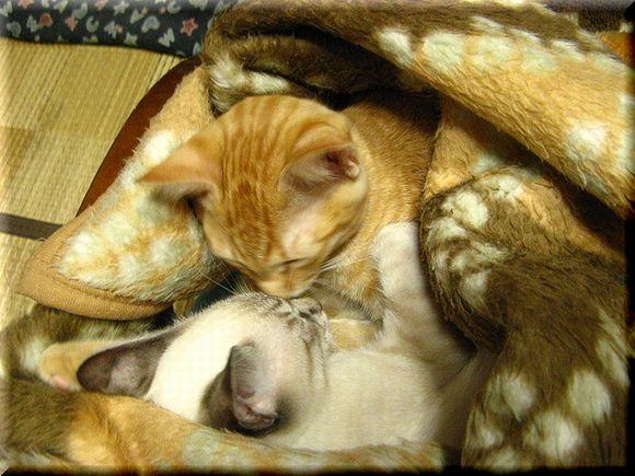 おやすみのちゅっ♪