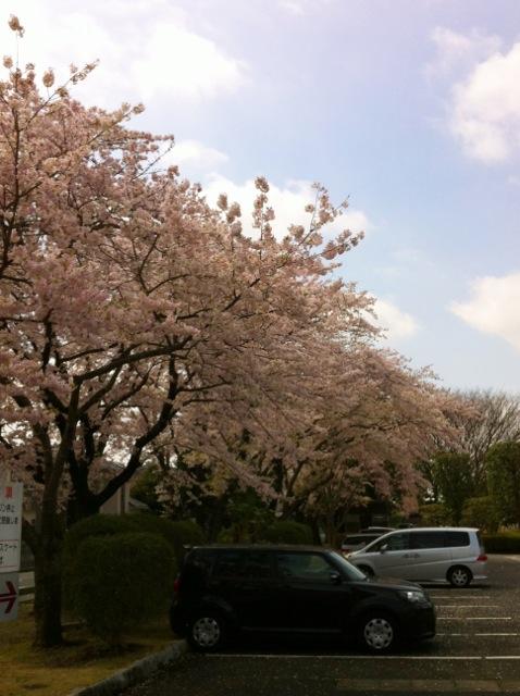 桜H13 武道館駐車場