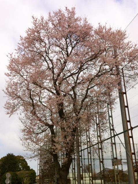 桜H10 茨城大