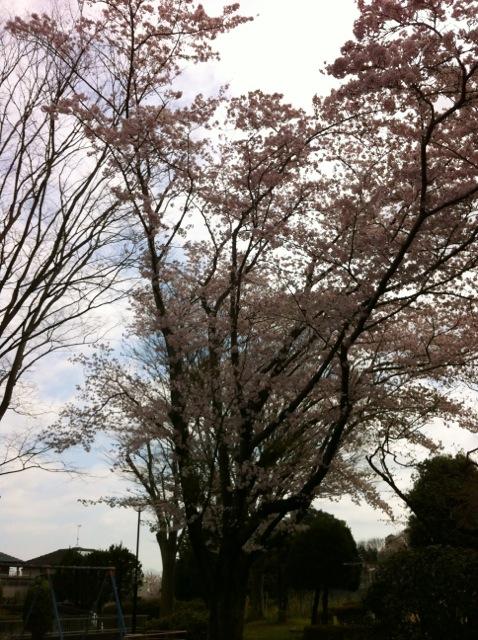 桜H 8文京の公園