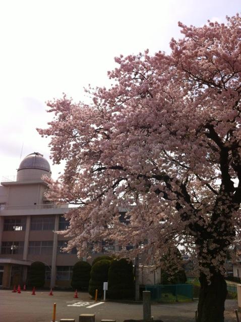 桜H 生涯学習センター