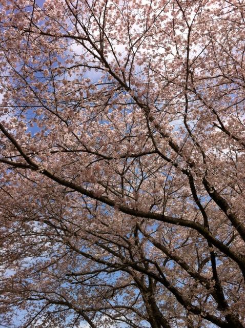 桜H5ほあえん2