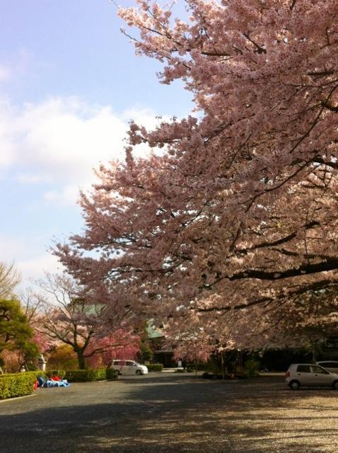 桜H3祇園寺