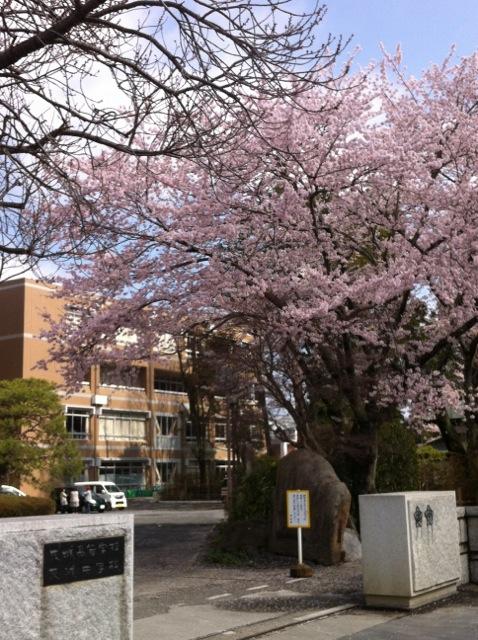 桜H 2茨中 高