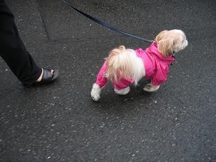 雨上がりの散歩2