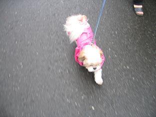 雨上がりの散歩3