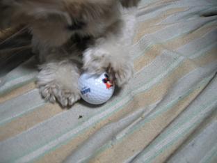 ゴルフボール4