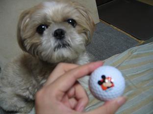 ゴルフボール5