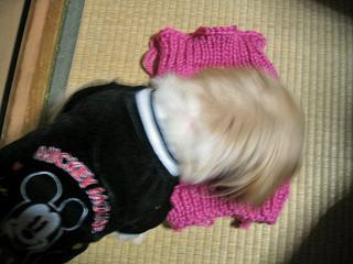くるみのセーター2