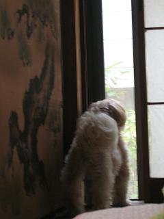 お外を見ています。