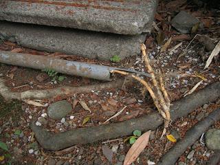 竹と配管1
