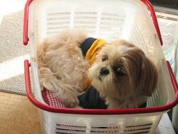 洗濯カゴの中1