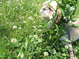 芝生とくるみ1