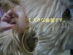 大きな瘡蓋