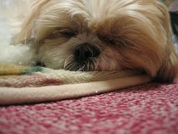 寝ています。