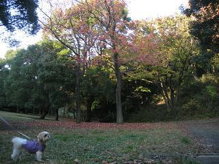 この辺では広い公園です。