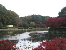 池がある公園です