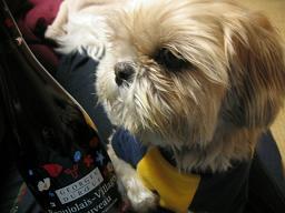 くるみとワイン2