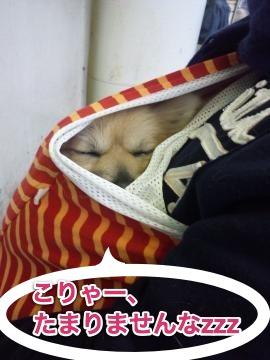 スリングで眠る