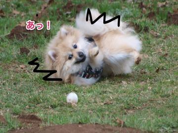 ボール逃げる
