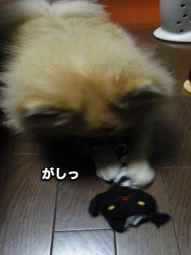 猫のおもちゃをつかむ1