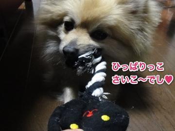 猫のおもちゃつかむ2