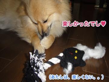 猫おもちゃで満足