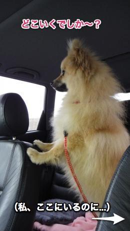 車からコロッケみる