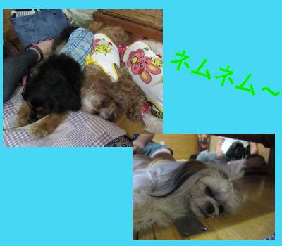 2011.7.11寝る~