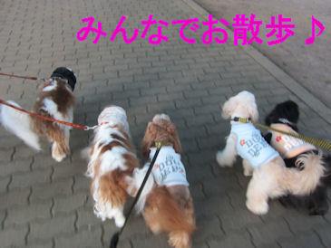2011.7.10お散歩だよー