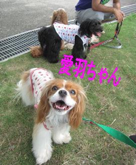 011.7.18愛羽ちゃん